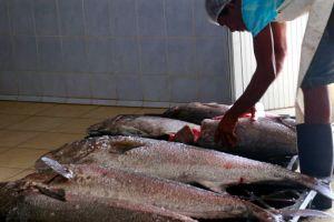 Intercambio-com-as-Palaies-de-Cabo-Verde-de-23-06-2018--01-07-2018_4